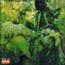 john mayall - blues from laurel canyon - CD
