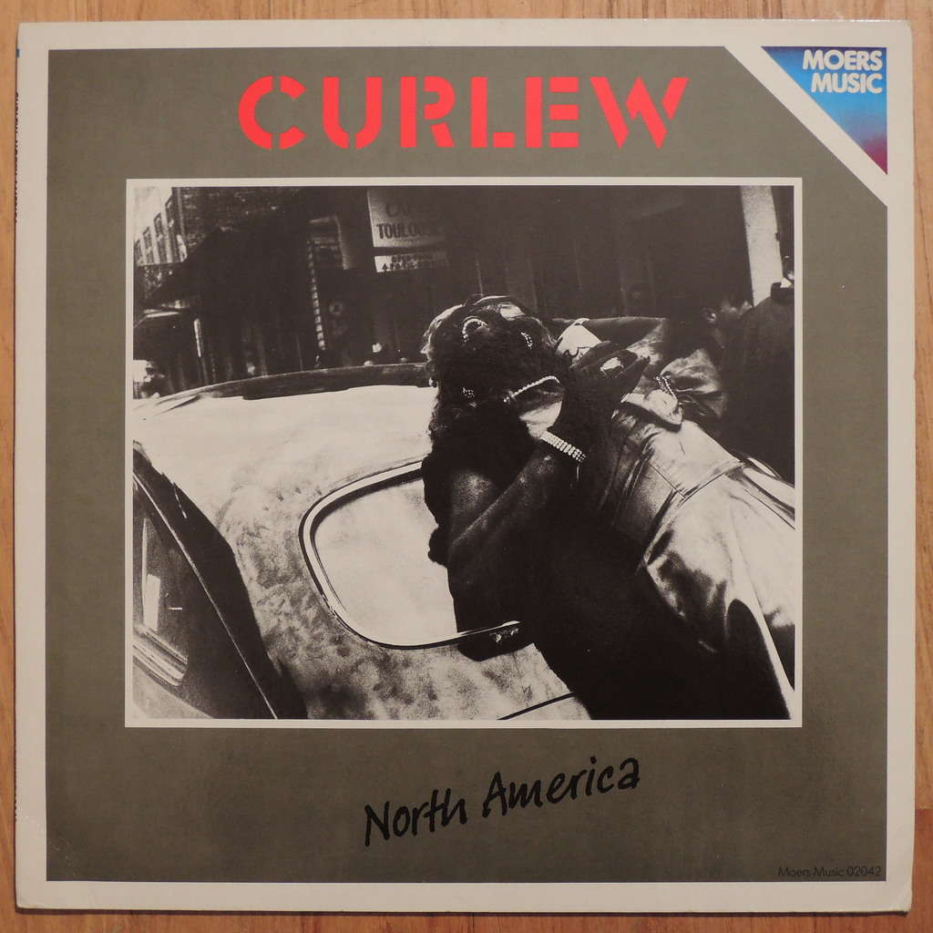 Curlew North America