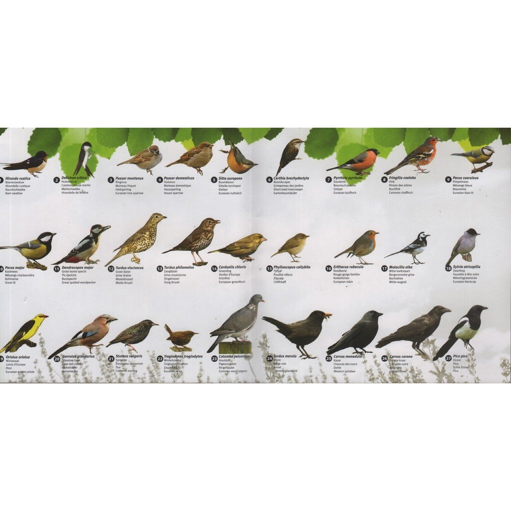 Vogelgeluiden - chants d\'oiseaux - vogelgesang - birdsong by Best ...