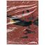 TONY RALLO AND THE MIDNITE BAND - BURNIN' ALIVE -promo copy, cut corner- - LP
