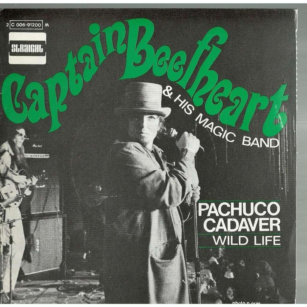 captain beefheart pachuco cadaver