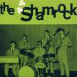the shamrock blues ham